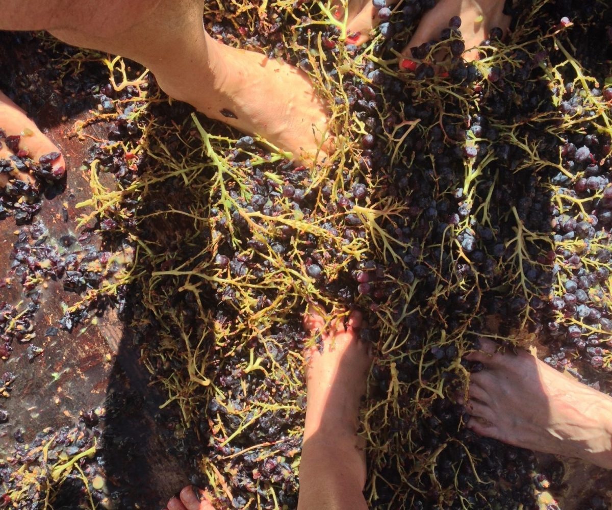 La Pastras grape stomp - Outdoor and cultural activities